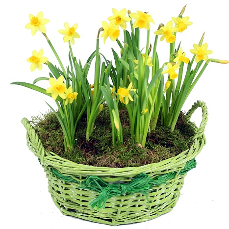 Order spring flowers and gifts london uk spring flowers london narcissus sesonal flowers uk by flowers24hours flower delivery london send fowers to london mightylinksfo