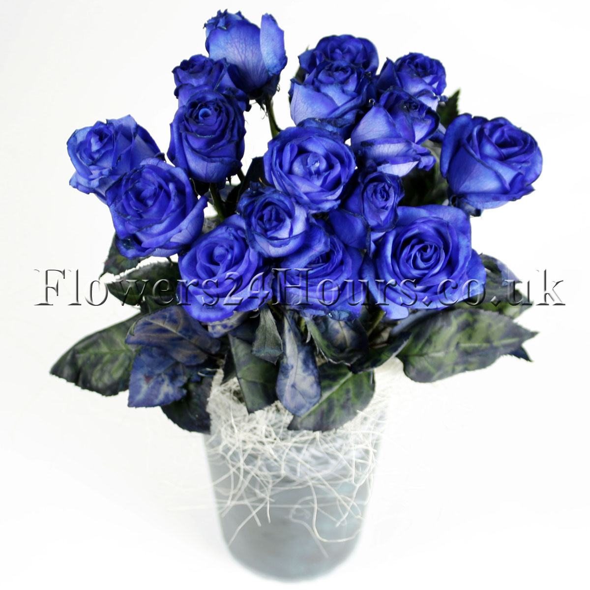 Midnight blue flowers image collections flower wallpaper hd halloween flowers delivered in london uk flowers blog flowers midnight blue roses izmirmasajfo izmirmasajfo