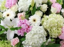 Regatta hydrangea flowers white hydrangea uk white hydrangeas hydrangea plants hydrangea meaning hydrangea flowering season uk