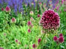 Spring-Flower-Arrangements-UK-Garden-Flowers-Delivery-London-Perennial-Garden-Plants-Spring-Bulbs-UK-Spring-Gifts-Garden-Flowers-Supplies-Spring-Flowers-Supplies