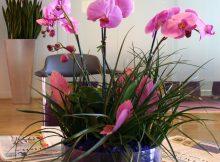 orchid-trio-pink-phalaenopsis-orchid-arrangement-plant