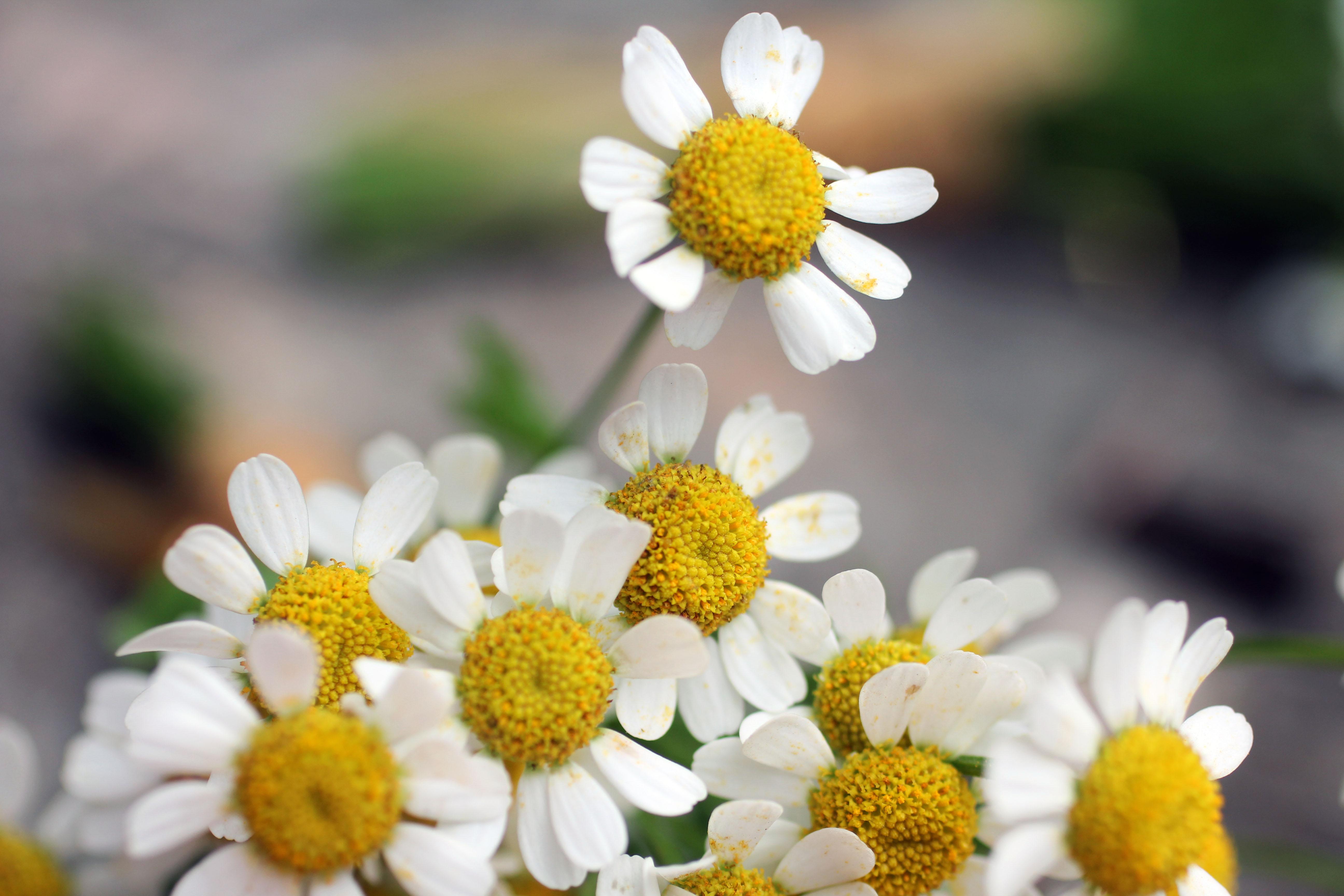 How to Grow Cut Flowers for a Summer Garden Flowers Blog