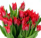 spring-plants