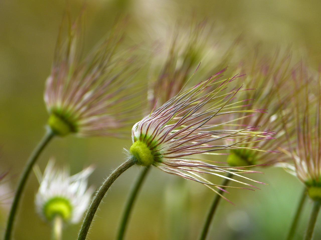 angiosperms-flowering-plants-uk