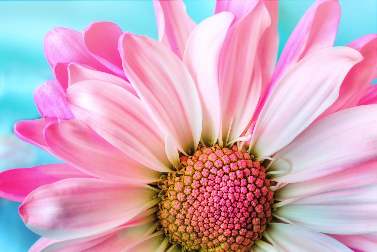 DAISY-S-London-florist-blog-flower-for-delivery-gifts-london-uk-florist-advice-flower-delivery-london