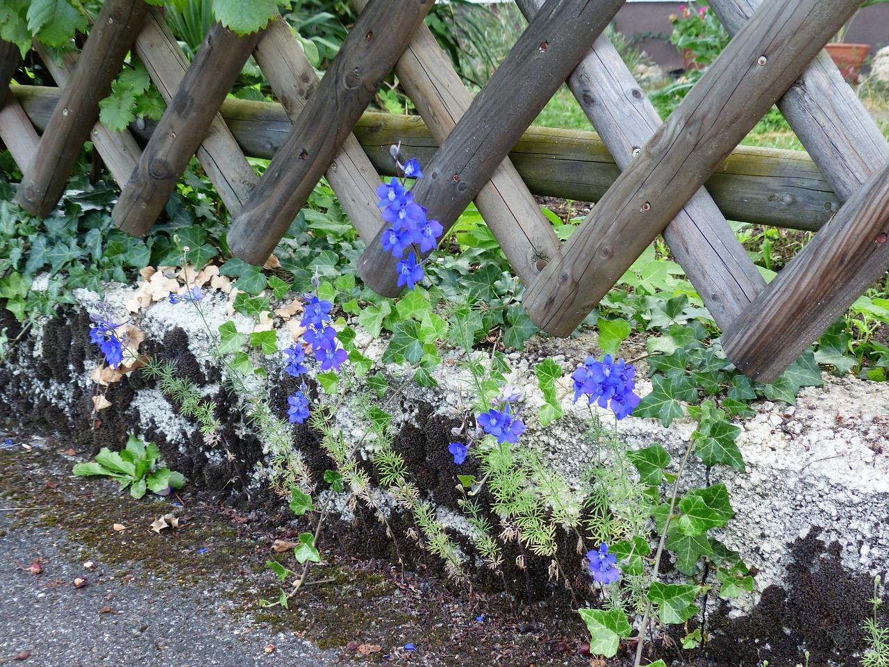 Delphinium-flowers-24-hours-london-flower-english-garden-flowers-london-florist