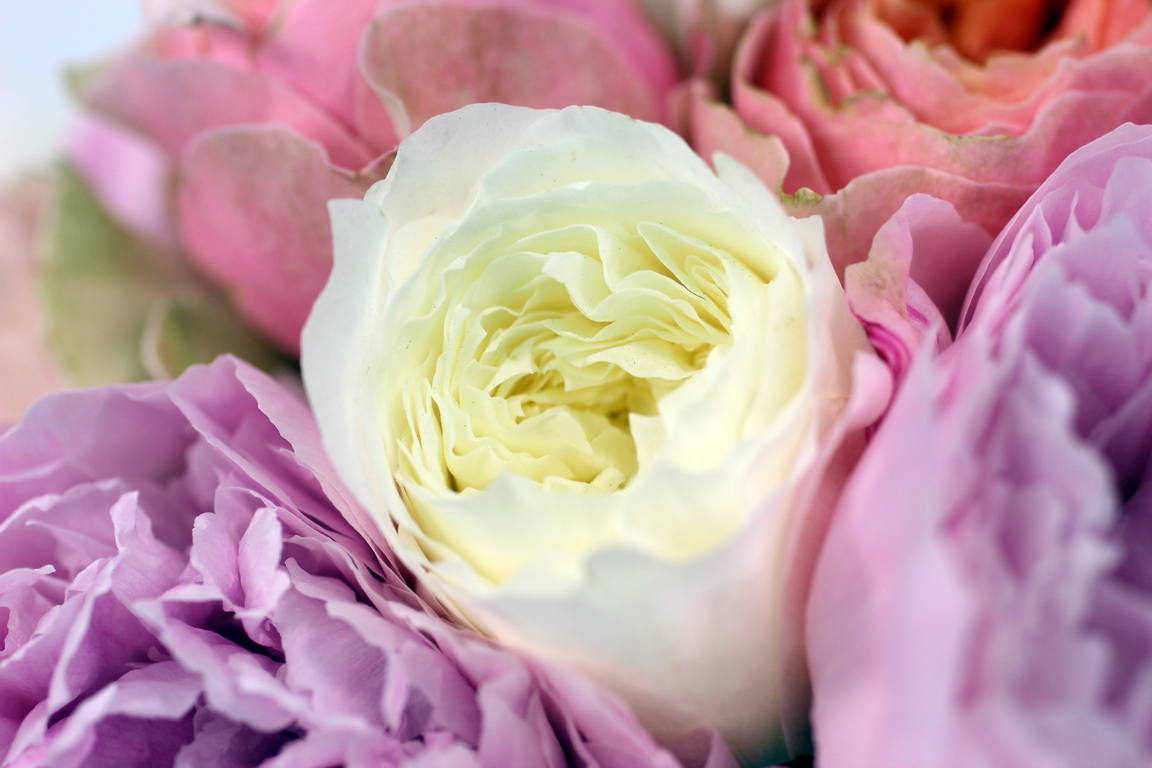 poeny-english-garden-flowers-london-florist-blog-uk