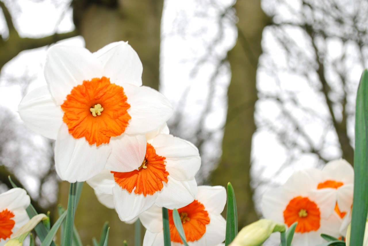 daffodils-wilflowers-flower-bouquets-delivery-london