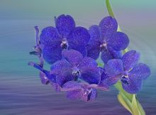 orchid-summer-ode-to-orchid-send-orchids-to-london-orchid-london-delivery-online-london-florist-tips-orchids