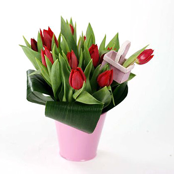 tulips in a pot