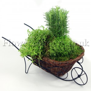 Herb Wheelbarrow. Green plants for online deliveries. Flower delivery company Flowers24hours
