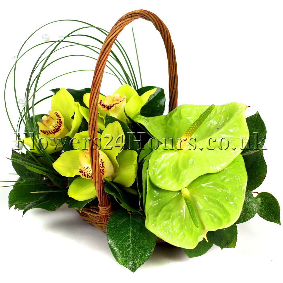 Birth flowers of autumn and other seasons 3 fairy forestresize izmirmasajfo