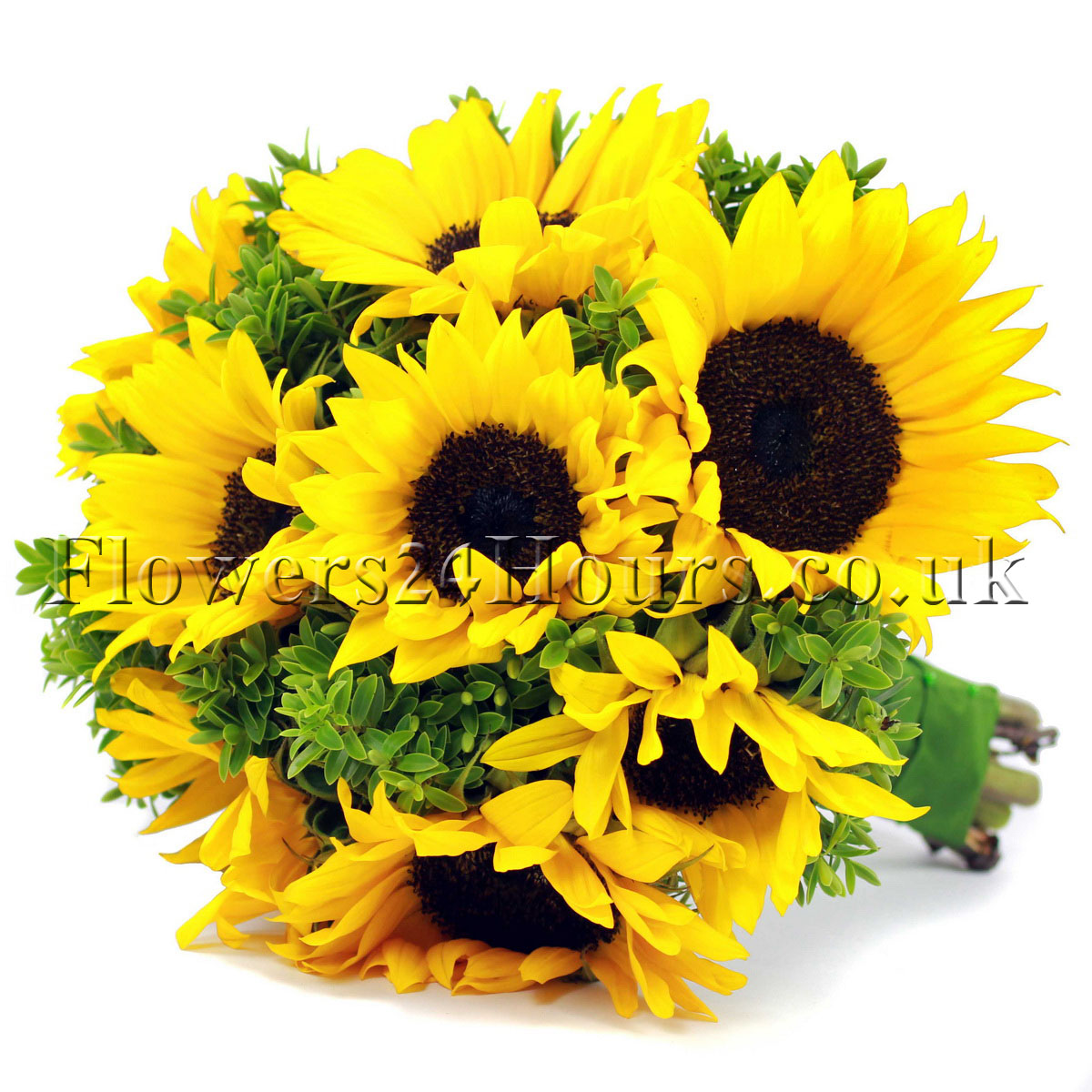 Sunflower birthday quotes quotesgram