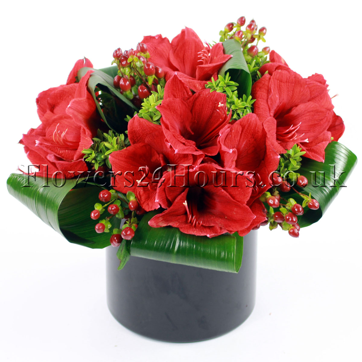 Amaryllis flower delivery UK by top London florists anf flower delivery shops. UK gifts online / gift delivrery service F24H
