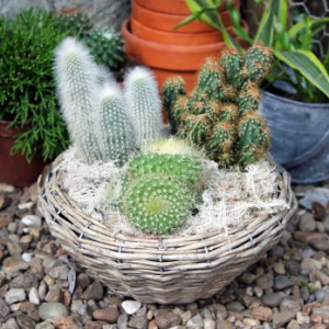 Plants for online deliveries. Flowering plants and planted arrangements. Cactus plant for flower delivery London