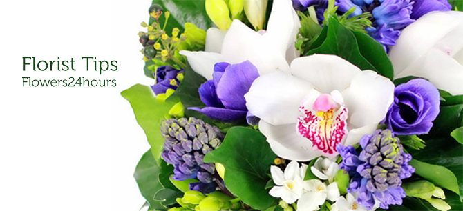 Flower delivery company florists tips. Flowers and Colours Florist Tips Flowers24hours.