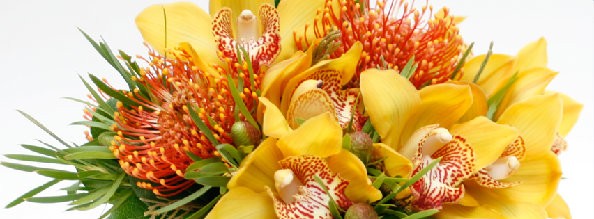 Orchids same day delivery and same day flowers UK - Flower delivery London. Best uk florists at our flower delivery shop offer london flowers at the most affordable prices!