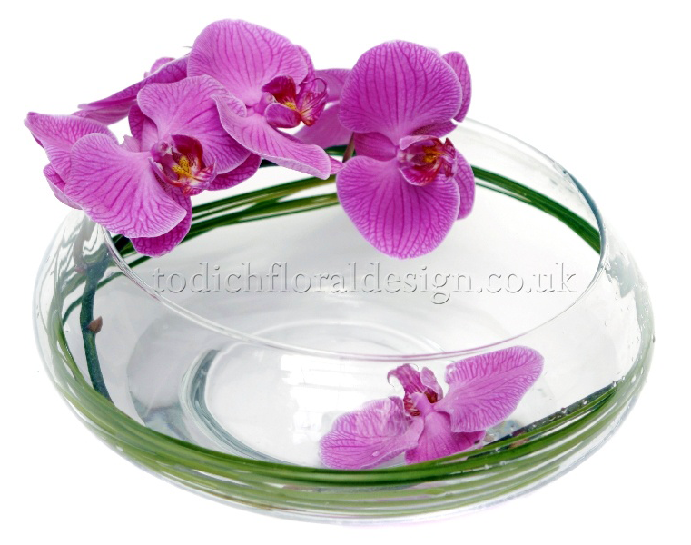 purple-passion-orchid-purple-orchid-delivery-london-same-day-purple-orchid-next-day-delivery-uk-purple-orchid-plant-uk-london-florist-blog-purple-flowers-24-hours-london-uk