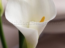 White Calla Lily The magic of flowers London flowers English flowers delivered online English flowers designed by top London florists
