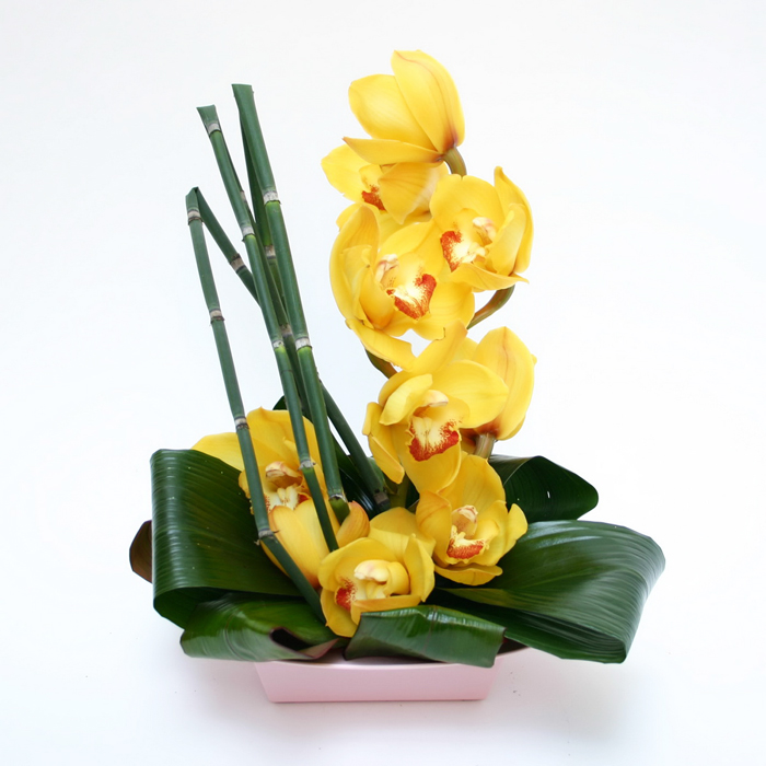 15) Orchid Dream_resize
