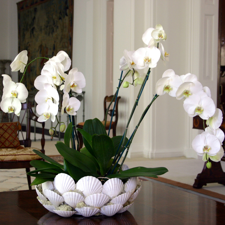 Home Decor Flowers UK White Orchids Delivery London UK Orchid Plants Same  Day Delivery London Home