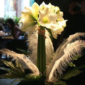 white-amaryllis-vase-arrangement-flowers same day delivery london uk january flowers delivery london uk same day delivery london florist winter flower arrangements deliv