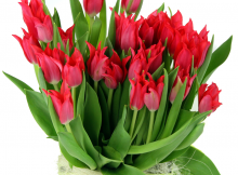Spring flowers gifts delivery london uk easter surprises 5 budding easter flowers negle Choice Image