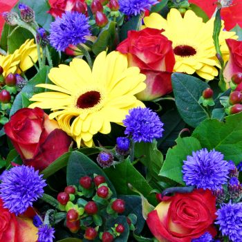 Gerbera Spring flowers for your garden spring flowers delivery London flowers online Spring flower arrangements Flower same day london delivery Gift delivery UK