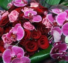 Hurricane Love Purple Orchids Delivery London Purple Orchid Plants Same Day Delivery London Next Day Delivery UK