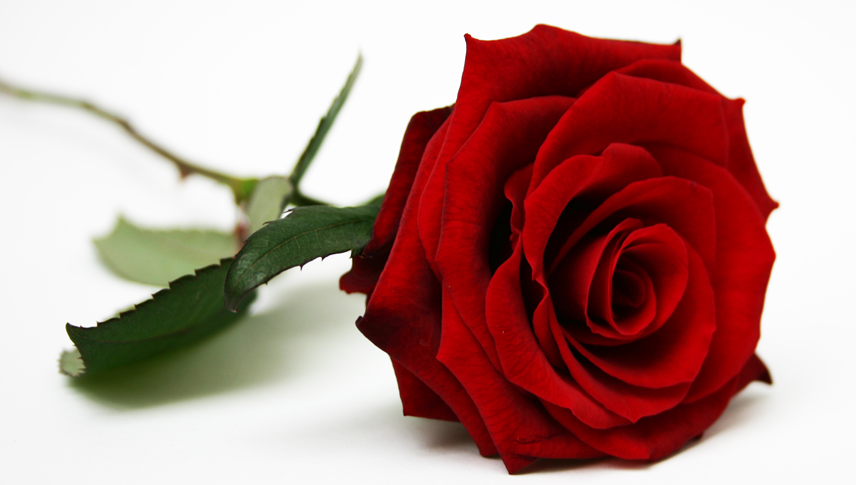 valentines-day-red-roses-delivery-london-uk