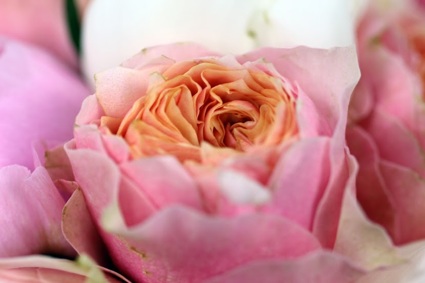 pink-poeny-english-garden-London-flower-delivery-shop-and-online-florist-UK