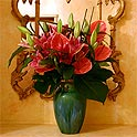 Flamenco - Anthuriums & Lilies