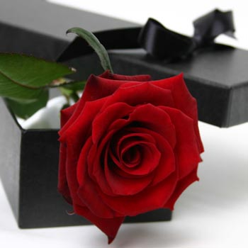 passion-in-a-box-single-red-rose