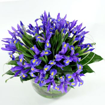 iris-flowers-delivery-same-day