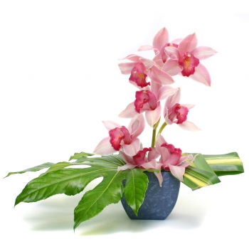 cymbidium-orchid-arrangement