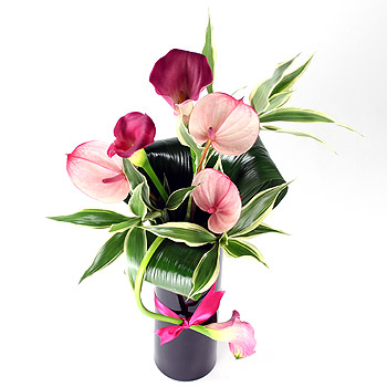 pink-lady-calla-lily-and-anthurium-vase-uk-flower-delivery
