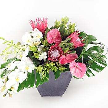 glissadeexotic-flowers-and-orchids-same-day-delivery-flowers