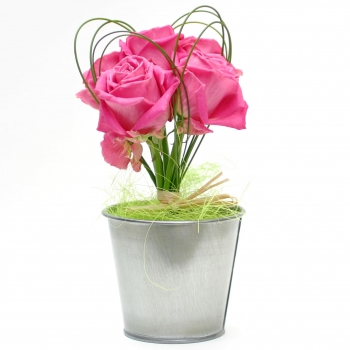 potted-pink-roses-sending-flowers