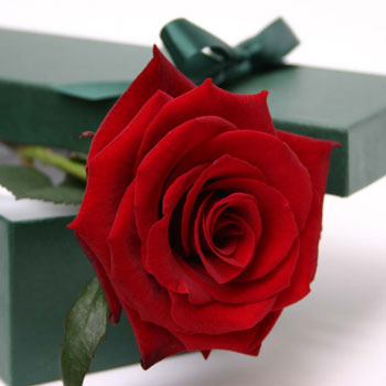 Love in a box love in a box flower gift delivery london negle