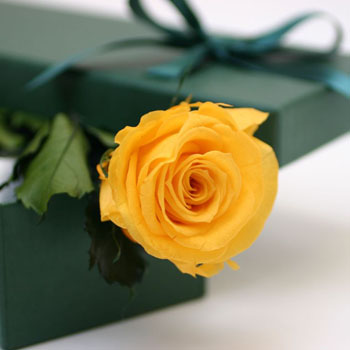 single-yellow-rose-in-a-box-florist-london