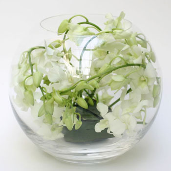 bowl-full-of-orchids-delivery-flower-in-london