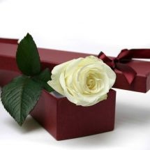 Desire in a box - Single white rose.