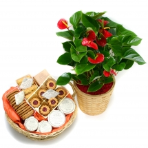 Anthurium & Gourmet Basket