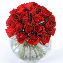 Red Rose Dome - Valentines