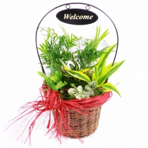 Welcome - planted basket