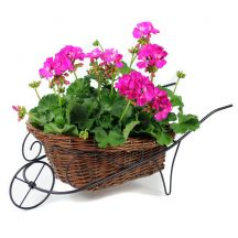 Geranium Wheelbarrow
