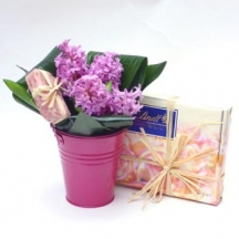 Hyacinths and Chocolates