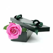 single-pink-rose-in-a-box-florist-in-london