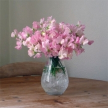 sweet-peas-flower-delivery-uk