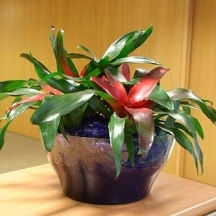 Tropical Flower Arrangements on Indoor Plants Arrangement